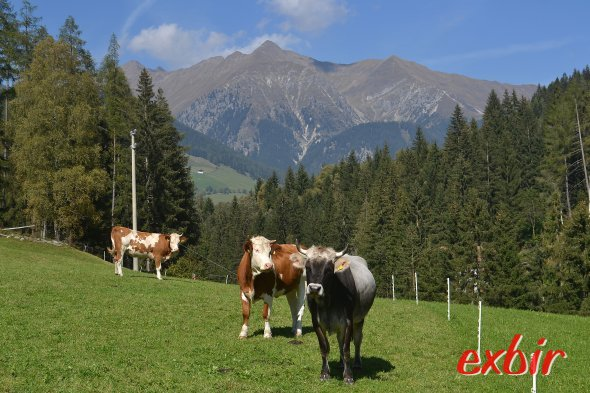 Dolomitenidylle in Südtirol bei Bolzano/Bozen.  Foto: Christian Maskos