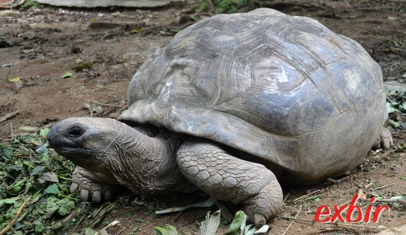 Riesenschildkröten sind auf den Seychellen und Praslin oft zu sehen.  Foto: Christian Maskos