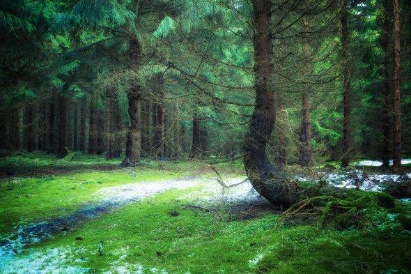 etwas Schnee ? So sehen die Wälder derzeit bei uns aus. Ein Hauch von Schnee!