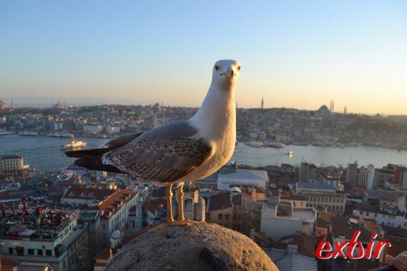 Auch die Taube genießt den sensationellen Blick beim Sonnenuntergang vom Galata-Tower in Istanbul.   Foto: Christian Maskos