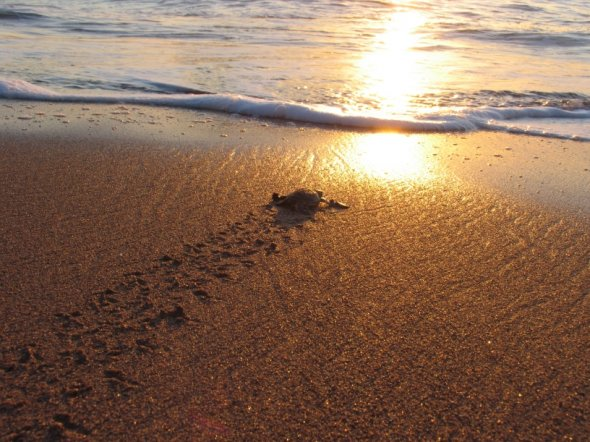 Schildkrötenfreiheit Komoren