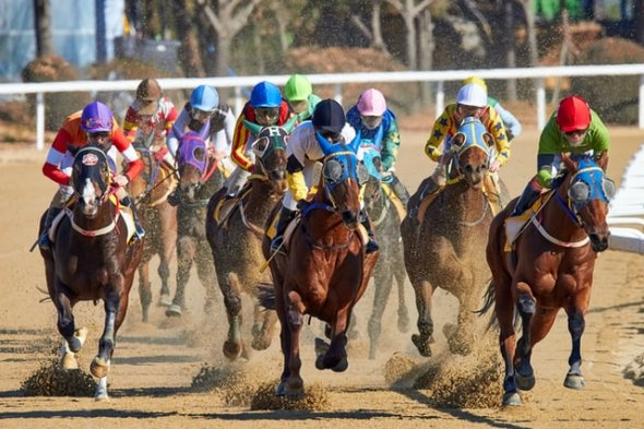 Horse racing in Korea