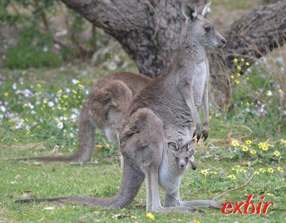 Ein Bewohner Australiens mit Kind