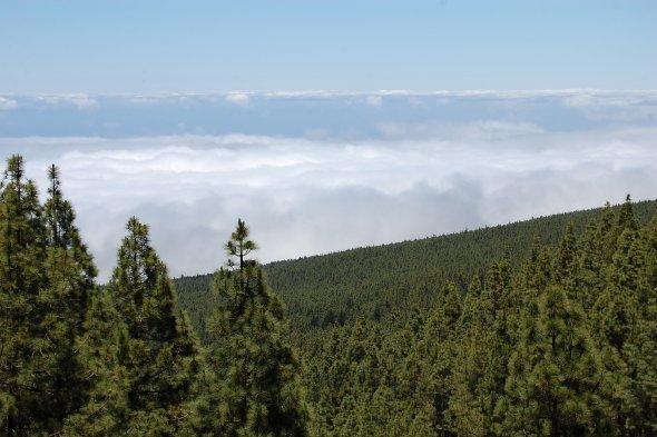 Über den Wolken. Unterwegs in den Apalachen und der spektakulären Bergwelt von Virginia und West  Virginia.