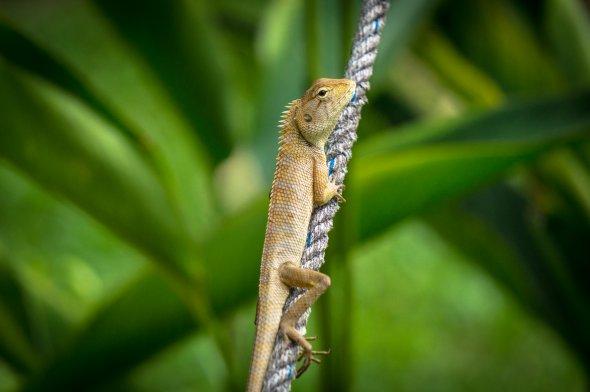 Tiny Lizard. Urheber: Per Salomonsson. Lizenz: creative commons, Namensnennung, Weitergabe unter gleichen Bedingungen