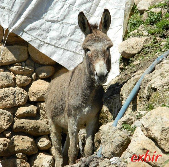 Esel gehören in Hasankeyf zum Alltagsbild.  Foto: Christian Maskos