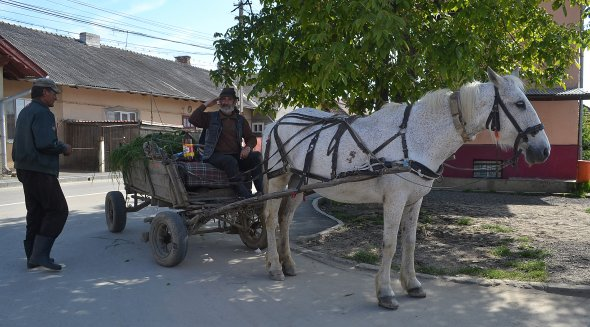 Pferdewagen gehören in Rumänien - wie hier in Turda-  noch zum Straßenbild.  Foto: C. Maskos