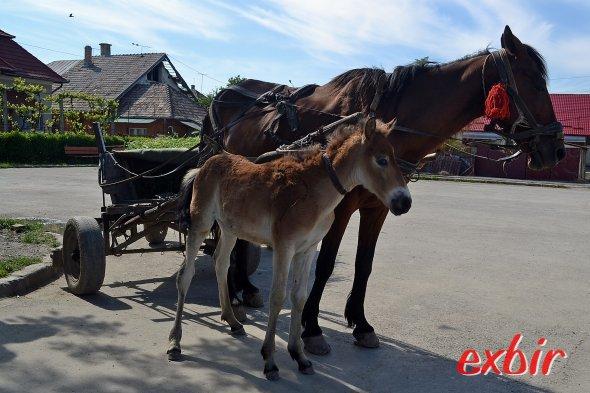 Pferdewagen sind Osteuropa noch ein alltägliches Fortbewegungsmittel.  Foto: Christian Maskos
