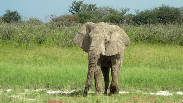 Elefant im Etosha Nationalpark in Namibia.