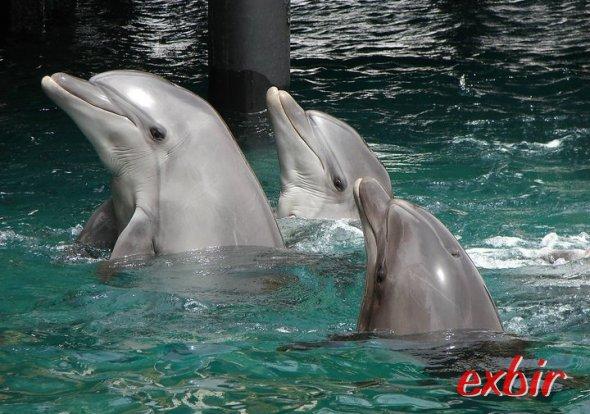 Delfine im Roten Meer bei Eilat.  Foto:  Exbir Travel, C. Maskos