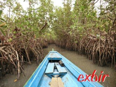 Mangroven in Gambia. Foto: Wolfgang Hesseler