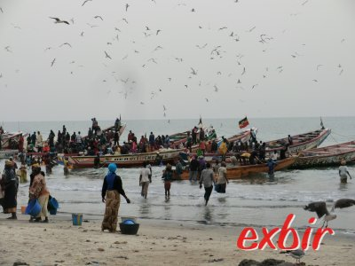 Anlandung der Fischerboote in Bakau, Gambia. Foto: Wolfgang Hesseler