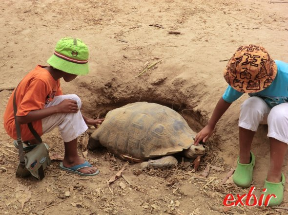 Schildkröte in der Gambian Reptiles Farm. Foto: Wolfgang Hesseler