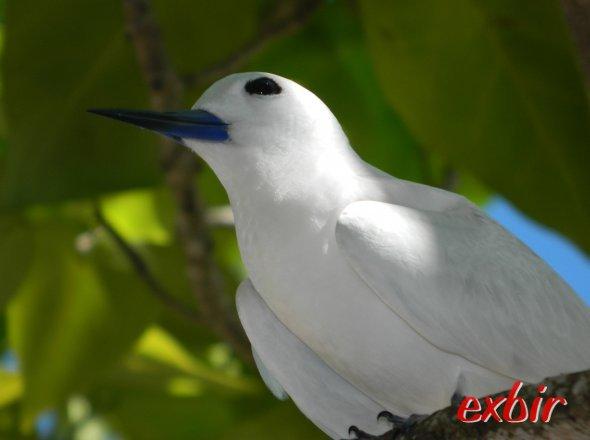 Auch die Vogelwelt ist Vielfältig und Sehenswert und passt zum Paradies auf Praslin.  Foto: Christian Maskos