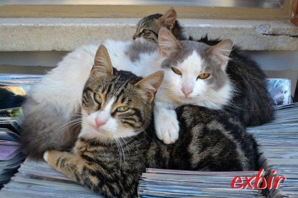 Katzen in Famagusta in Nordzypern.  Foto: Christian Maskos