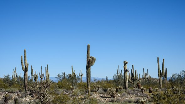 Kakteenfans kommen in Arizona auf ihre Kosten. Nirgendwo anders gibt es so viele Kakteen wie im US-Bundesstaat Arizona!