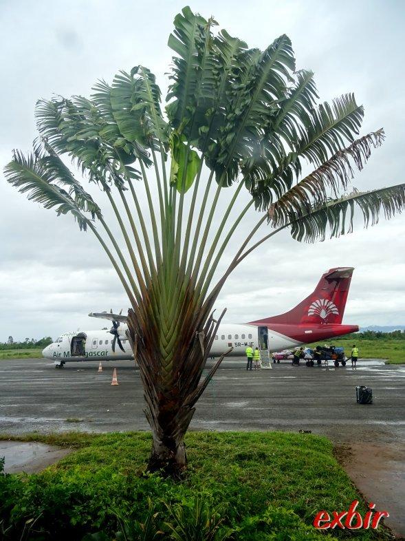 Palme mit Air Madagascar Flugzeug.