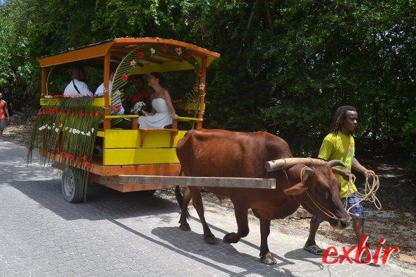Pferdewagen gehören auf La Digue zum Alltag - hier eine Hochzeitsgesellschaft.  Foto: Christian Maskos