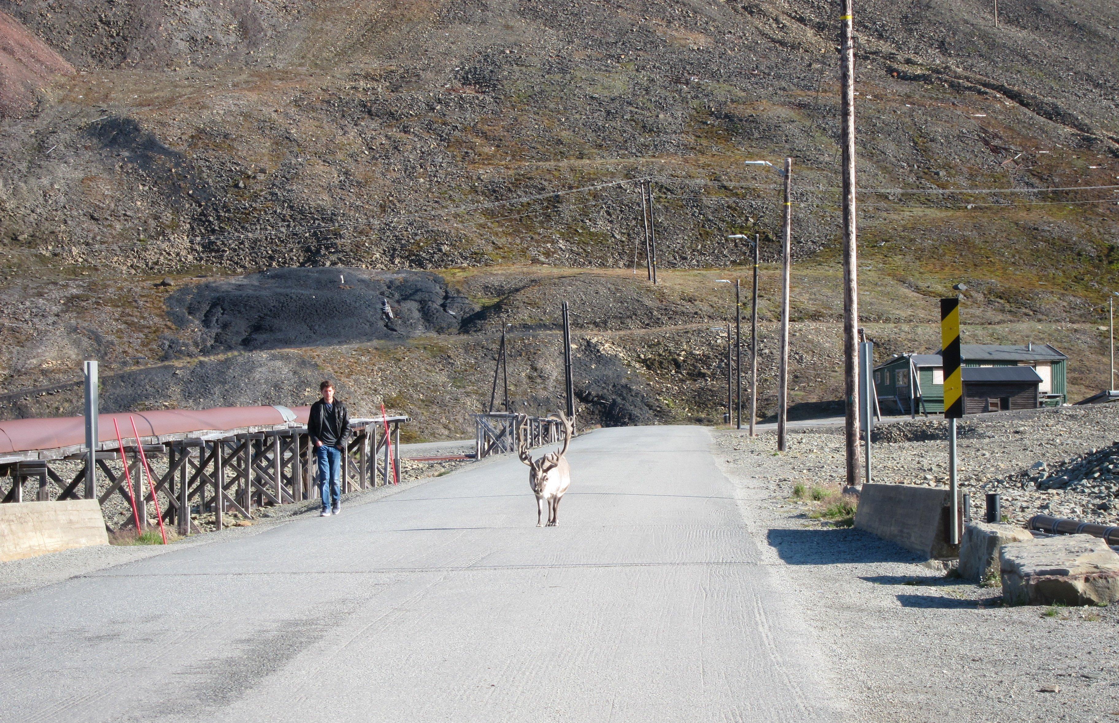 Svalbard Renteir Longyearbyen.