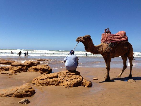Ein Kamel am Strand von Taghazout, Marokko